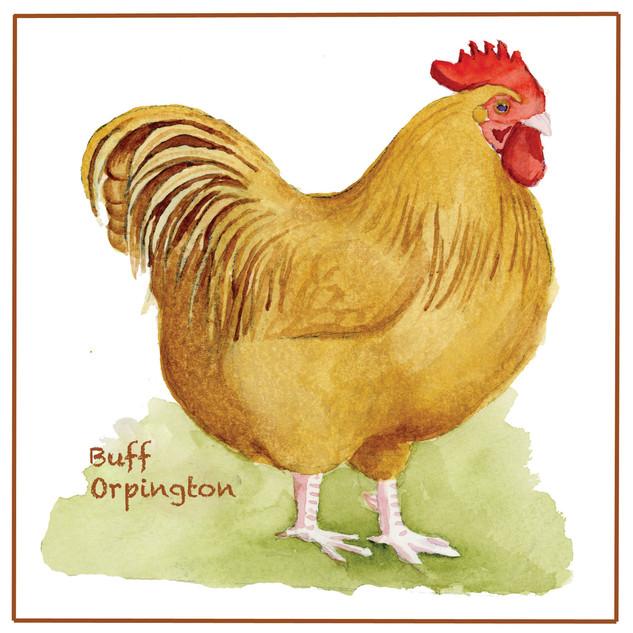 Buff Orpington