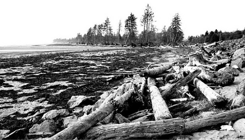 WA-driftwood_edited_edited_edited_edited