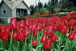 Bellevue, WA Botanical Gardens