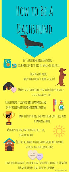 how to be a dachshund