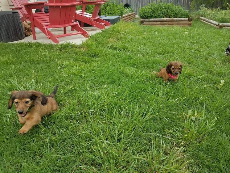 Jackie & Rosie