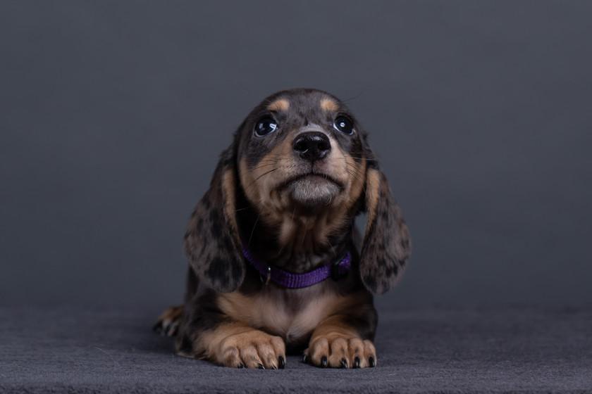 Purple - 10 weeks 06