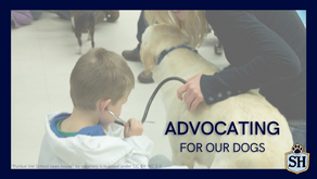 Advocating for Our Dogs