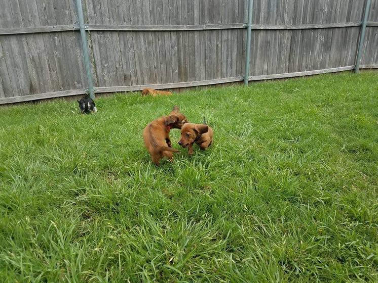 Rosie & Cocoa
