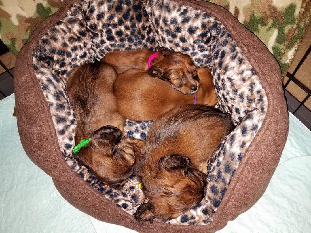 Mieke's puppies