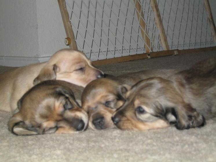Anke's puppies