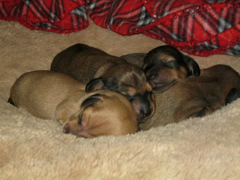 Anke's puppies