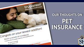Our Thoughts on Pet Insurance