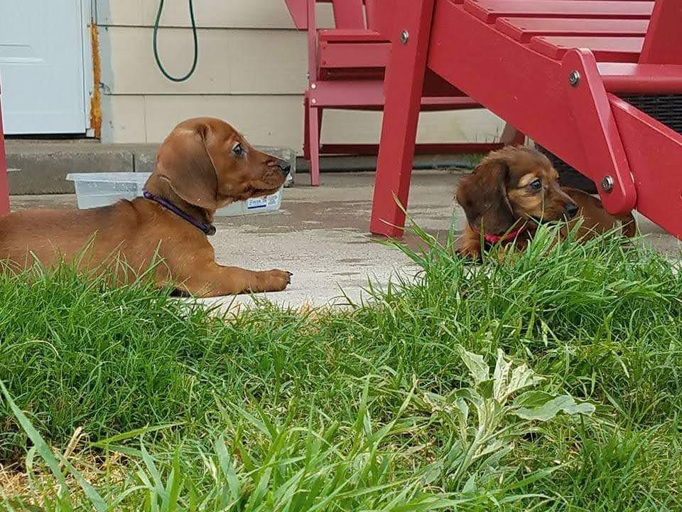 Cocoa & Rosie