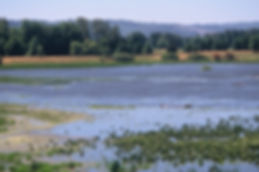 smith-and-bybee-wetlands.jpg