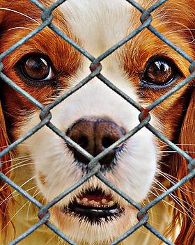 animal-welfare-1116184_1920.jpg