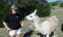 kelly llama
