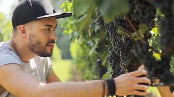 vinicola casa corba2.jpg