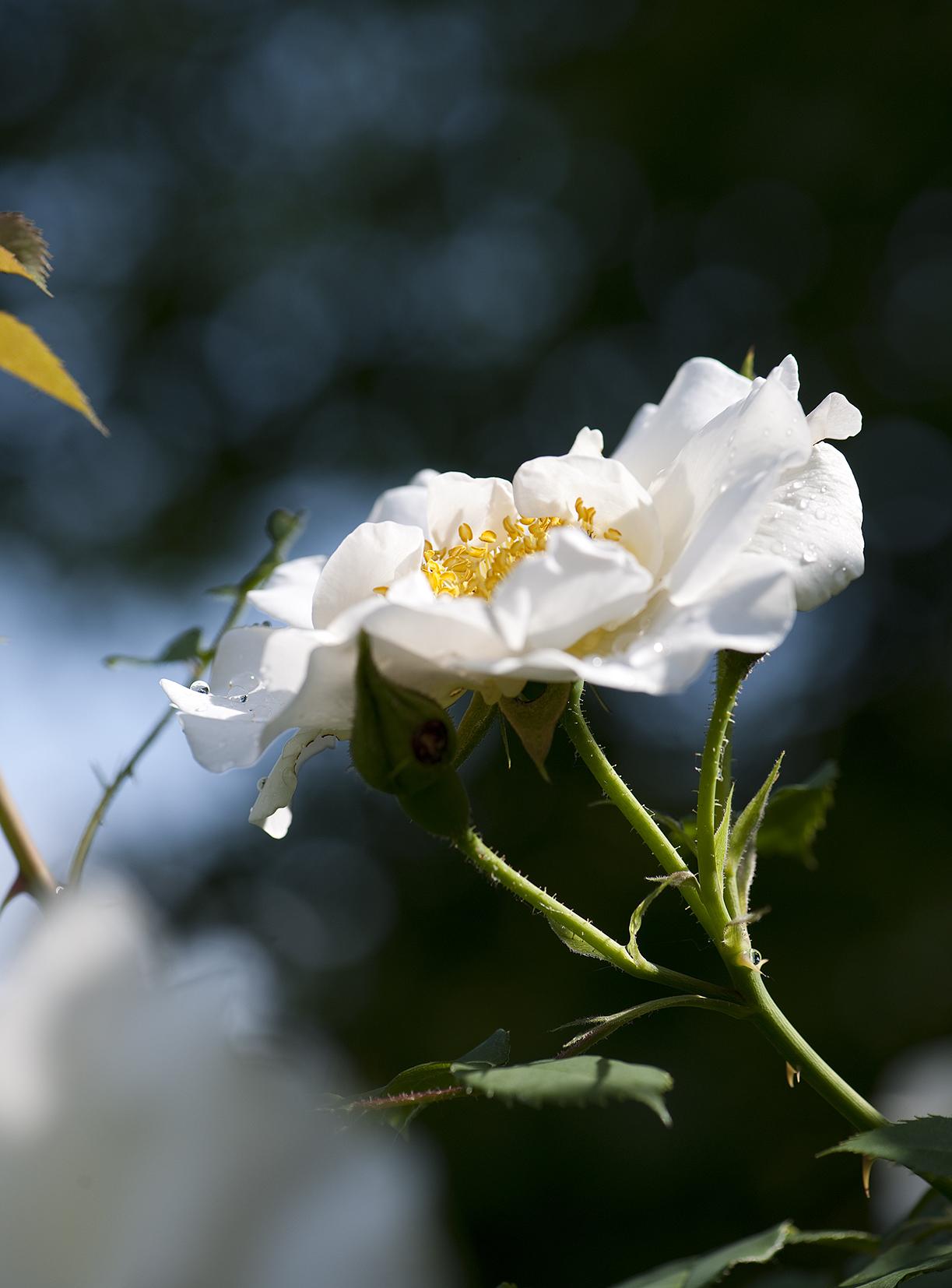 Les Fleurissements