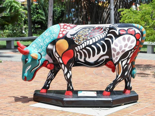 Famoso 'desfile' de vacas chega à capital baiana