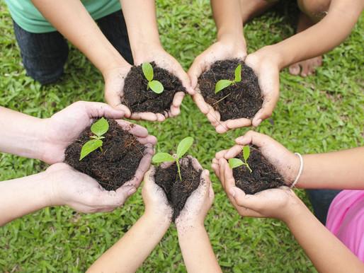 Vivência de jardinagem para bebês e crianças