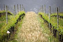 GoBike Wine Tours Hermanus South Africa
