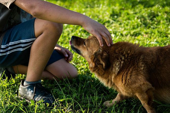 dog-454145_1920.jpg
