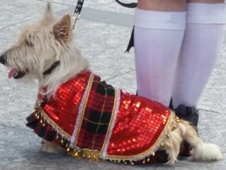 Lilly takes the reins at Tartan Day!