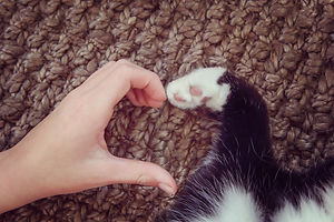 Person's hand and a cat's paw making a h