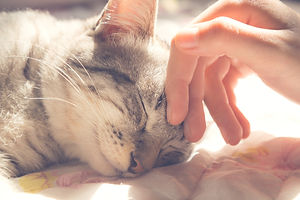 woman hand petting a cat head, love to a