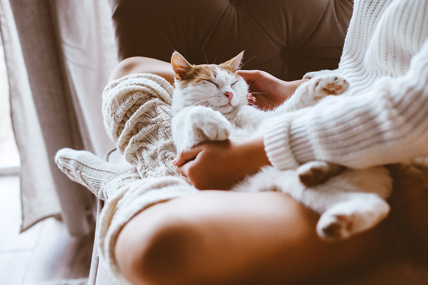 Cute cat sleeping on owners's hands one