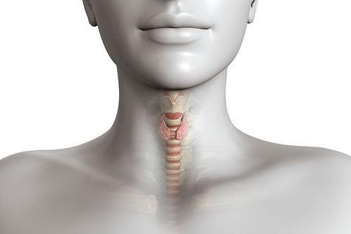 Thyroïde : traitements et hygiène de vie