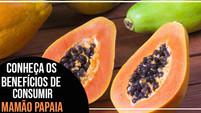 Benefícios do mamão papaia