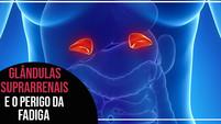 A fadiga das glândulas suprarrenais e sua importância