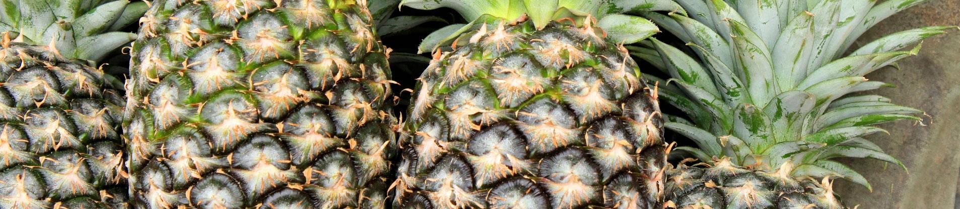 importateur-d-ananas-en-france-5