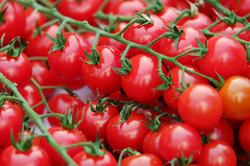 importateur-en-france-de-tomate2