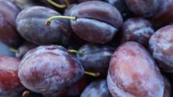 importateur-de-prunes-2