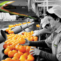 Total-Produce-image-2
