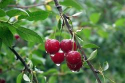 fruit-3235152_1920