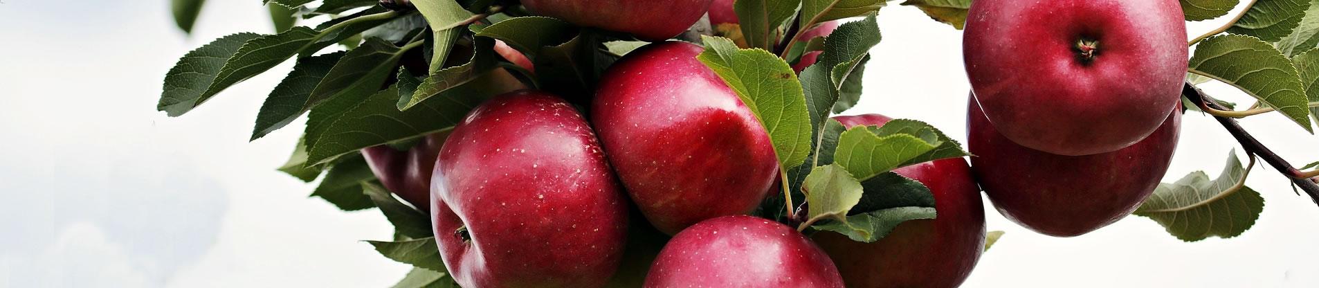 importateur-de-fruits-exotiques-et-fruits-de-contre-saison-marseille-france-4