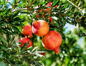 importation et distribution à Saint-Etienne de fruits frais de contre-saison et exotiques