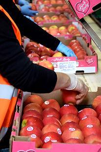 Fournisseurs de fruits exotiques à Aix-en-Provence
