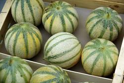 importateur-en-france-de-melon38