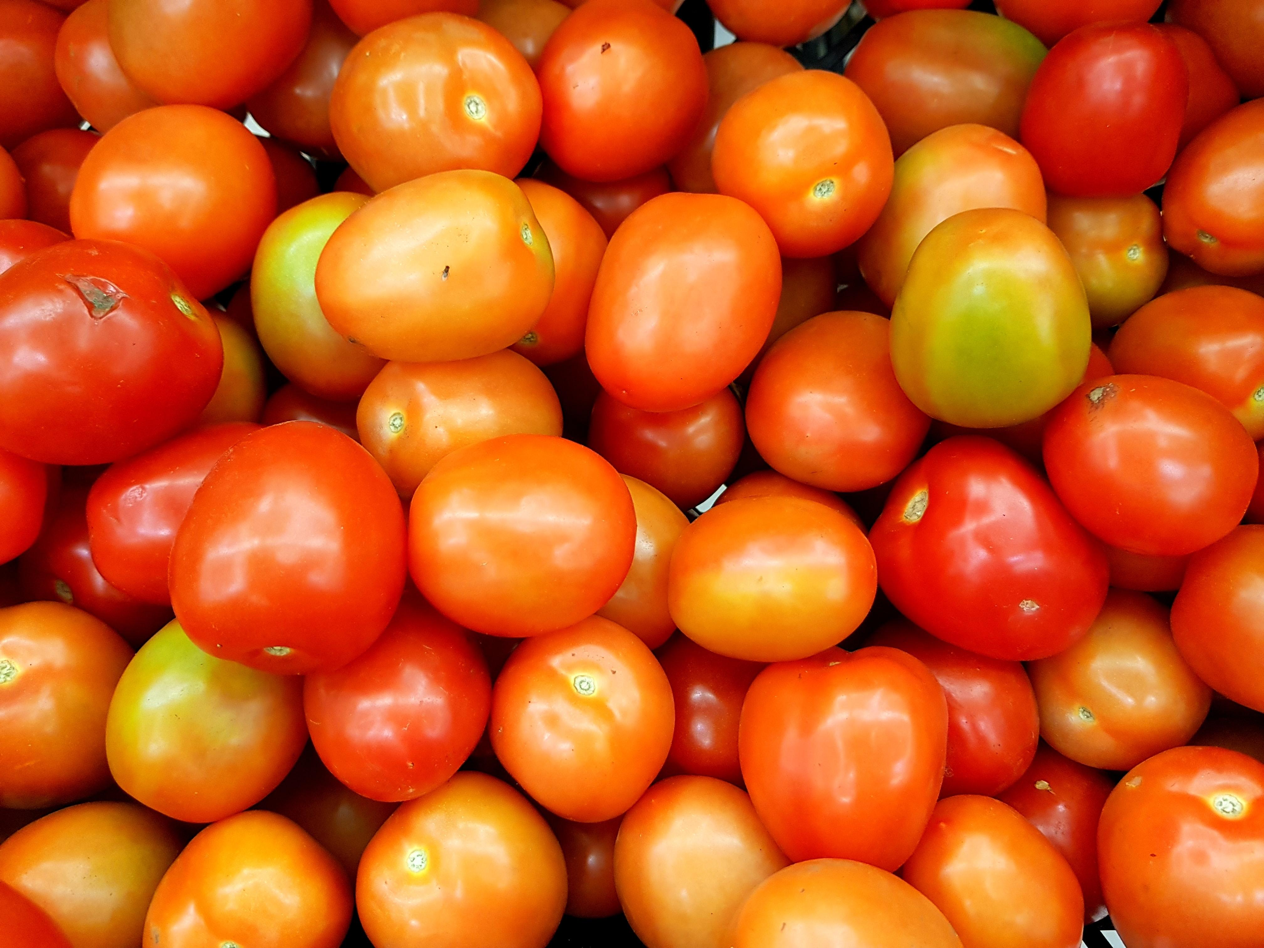 importateur-en-france-de-tomate5