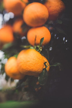 Importateur en France d'Orange du Swaziland