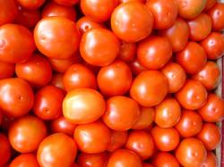 importateur-en-france-de-tomate