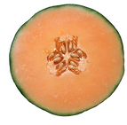 Importateur en France de Melons