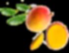 Importateur en France de Mangues