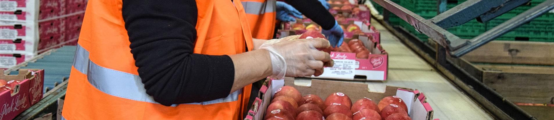 importateur-de-pommes-en-france-1