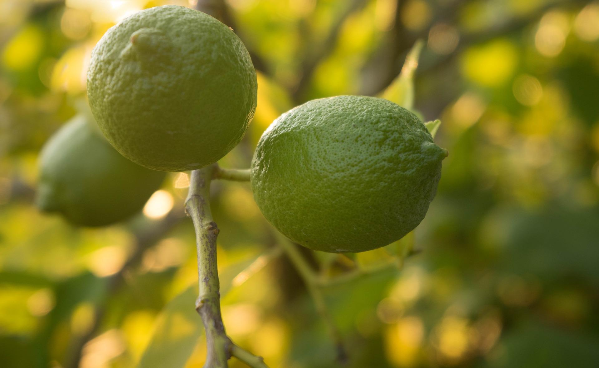 Importateur en France de lime du Mexique et des USA
