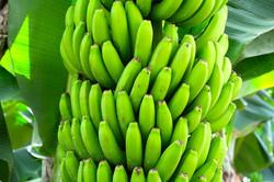bananas-1822914_1920