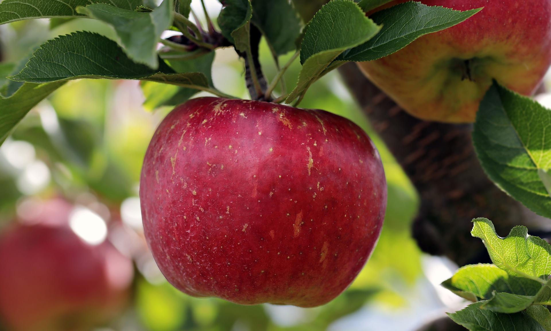 importateur-en-france-de-pommes-de-contre-saison-5