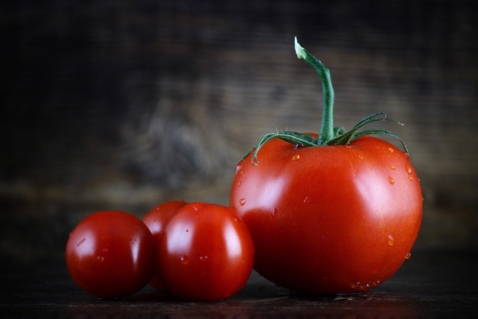 importateur-en-france-de-tomate4