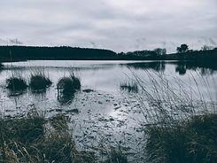 marsh (1).jpg
