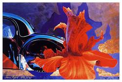 Tom+Hale_Bugatti-THH0013-large.jpg